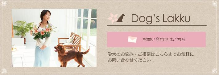 Dogs Lakku | 犬のしつけ等でお困りの方 出張ドッグトレーナーまでご相談下さい!京都・大阪・神戸